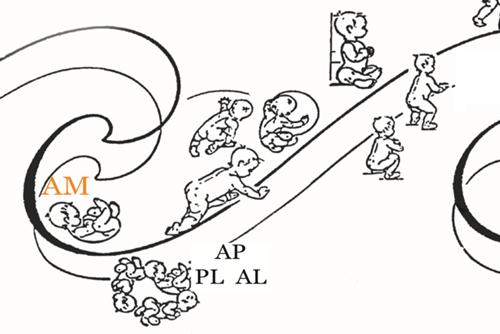 Módulo III de la Formación: Relación entre Comportamiento y Cadenas Musculares
